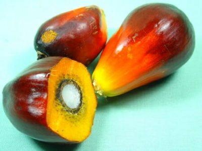 Olio di palma: rischi reali per la salute?