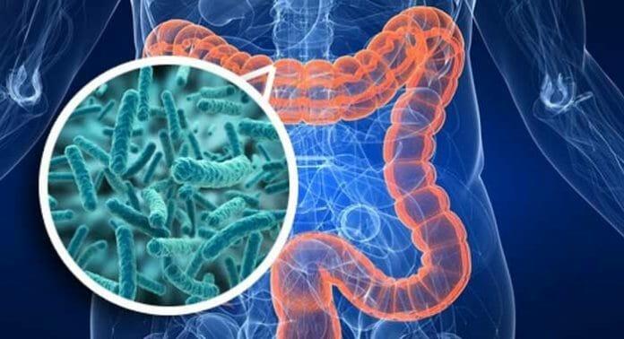 Patologie del mondo moderno e microbiota intestinale
