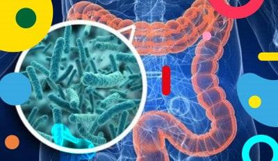 Microbiota intestinale: illiustrazione - alimentazionebambini. It by coop